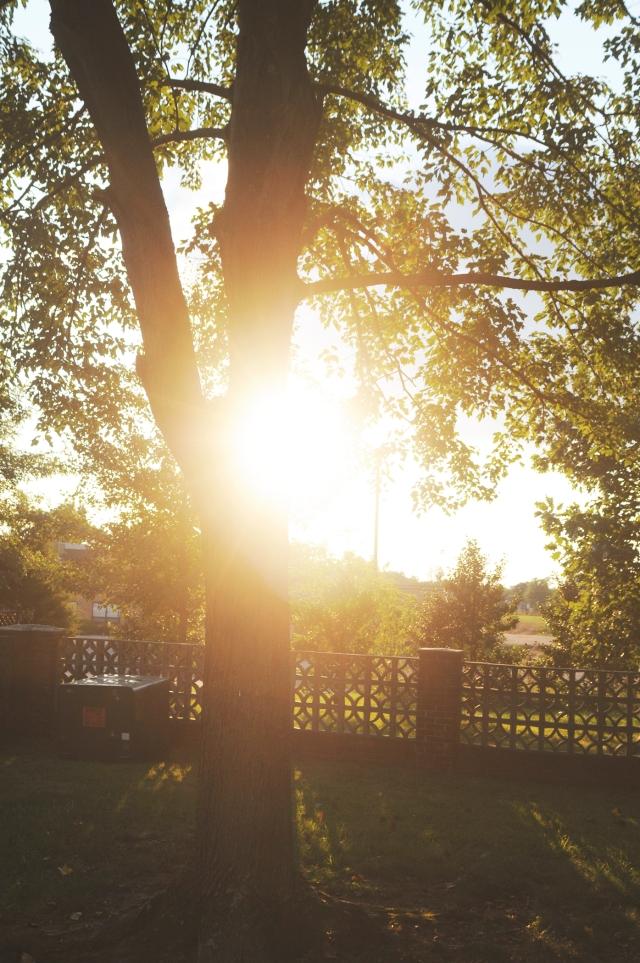summer_65