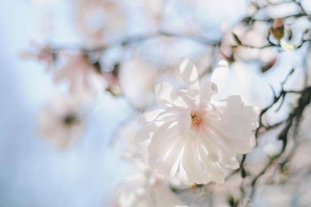 Spring-18