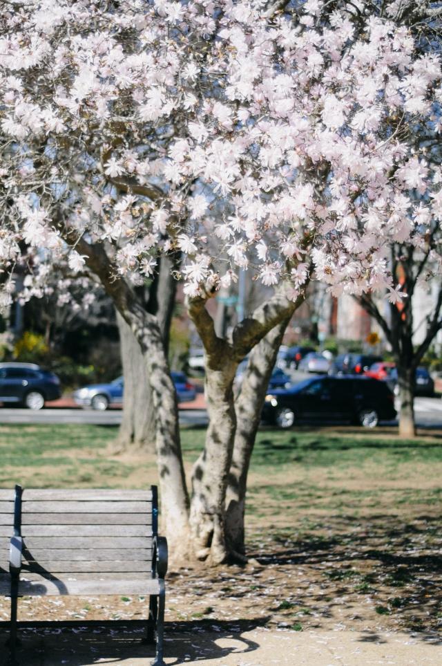 Spring-19