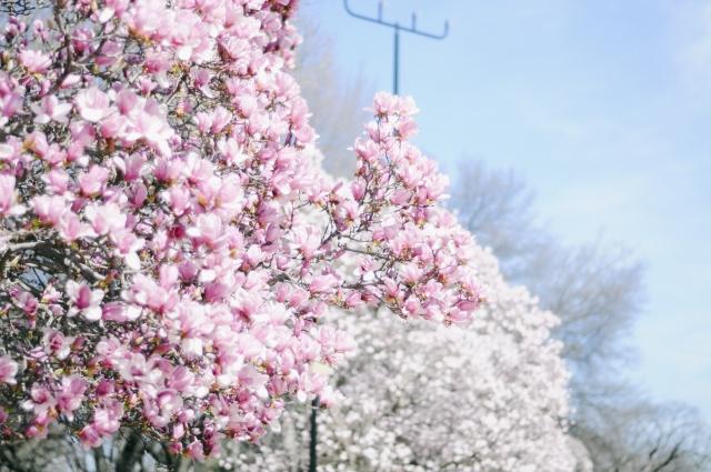 Spring-20