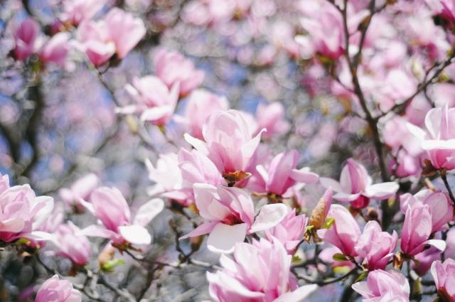 Spring-22