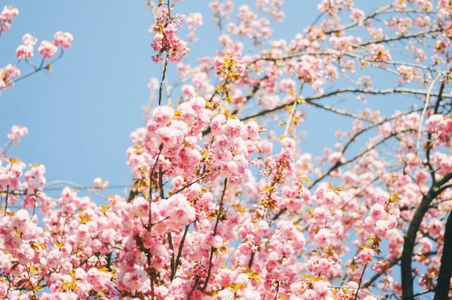Spring-74