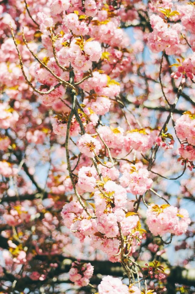 Spring-75
