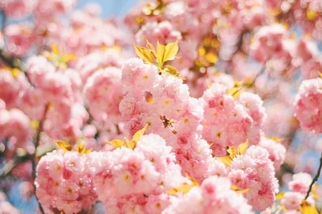 Spring-76