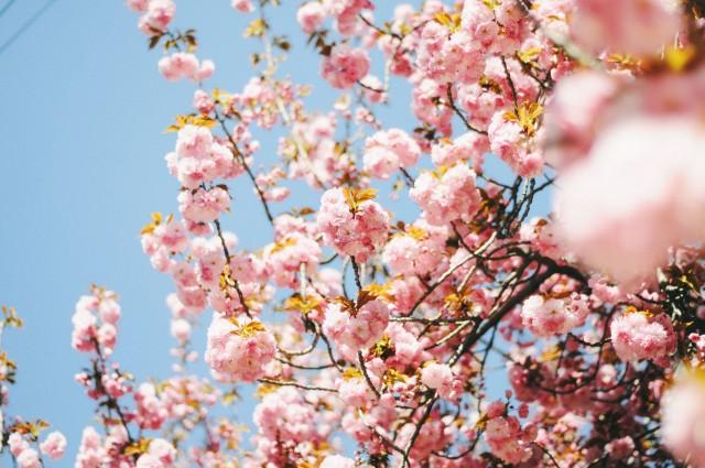 Spring-77