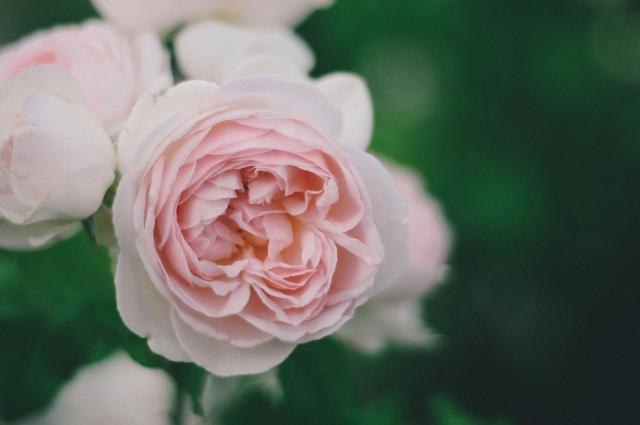Spring-164