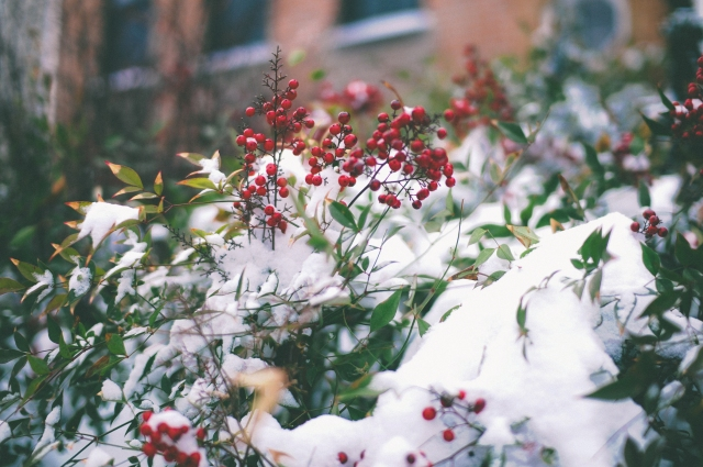 Winter2014-2015-275