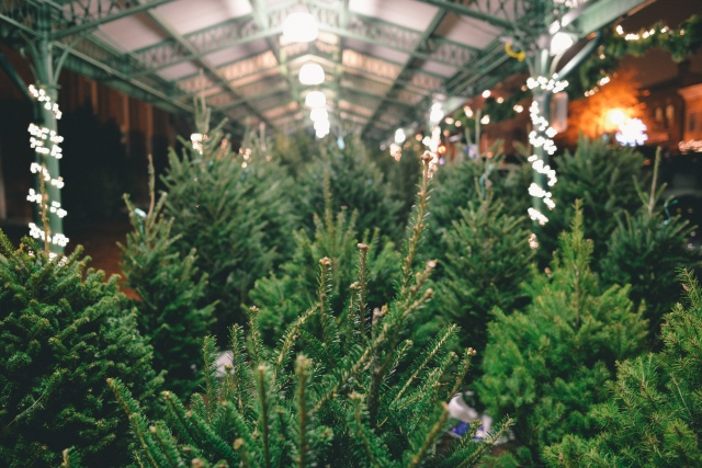 Christmastree-4