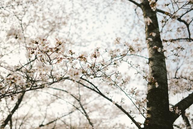 Spring2017-57