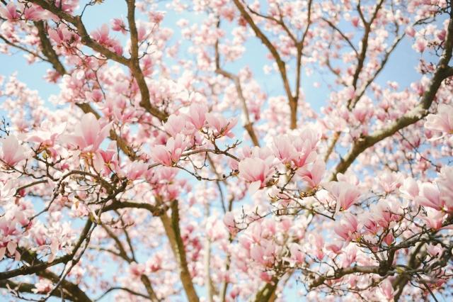 Spring2019-15