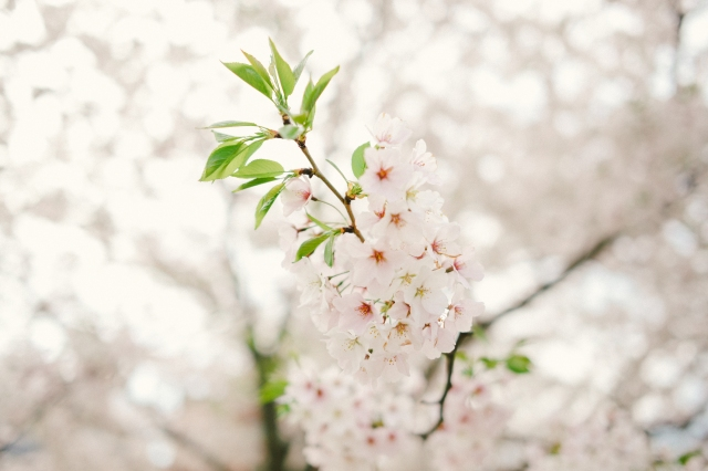 Spring2019-32