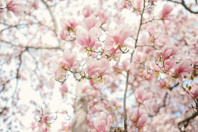 Spring2020-31